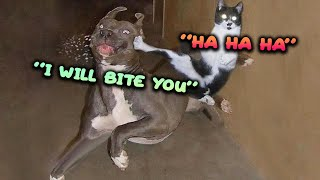 😱 MARVELOUS 🐶 Dogs and Cats 😻CAN TALK Funny Pet English Animals Life Videos 😇