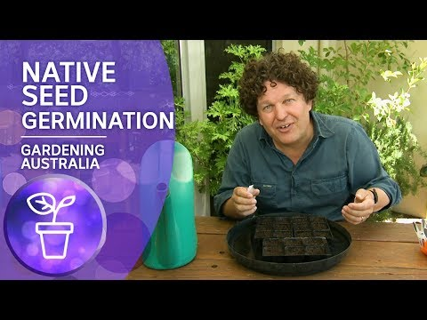 Four Ways To Germinate Native Seeds