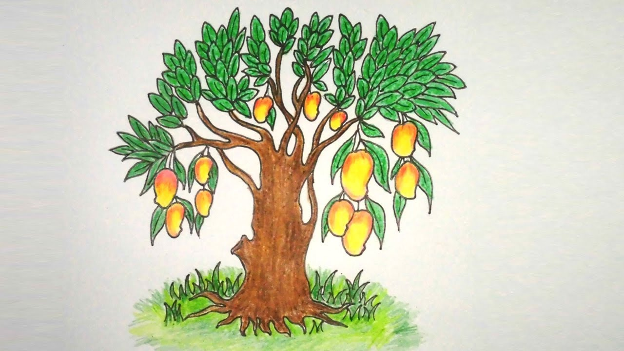 Mango Tree Drawing For Kids