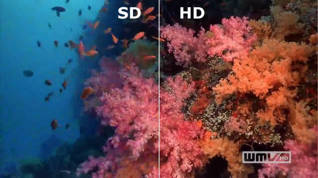 Sd Vs Hd In Video Resolution Sharp Distinction Youtube