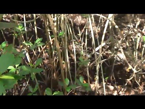 Adventurous Kids: Secret Woods Nature Center
