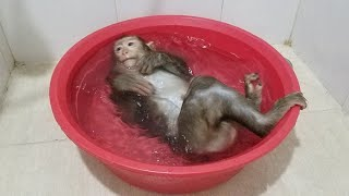 Monkey Baby Nui | Nui bath to cool