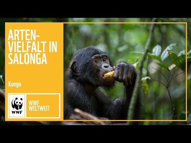 Kongo: Artenvielfalt im Salonga Nationalpark | WWF weltweit | WWF Deutschland