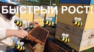 Ускоренное развитие веснойпасека 2018 в пчелосемьяхАпрель