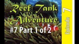 Reef Tank Adventure #7 Part 1 Of 2