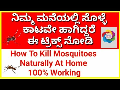 How To Kill Mosquitoes Naturally At Home 100% Working   Kill Mosquitoes  Health Care Tips In Kannada