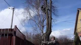 Удаление веток над проводами(Промышленные альпинисты ( арбористы ) помогут безопасно спилить, удалить дерево любой сложности. Высокое,..., 2015-07-27T21:31:07.000Z)