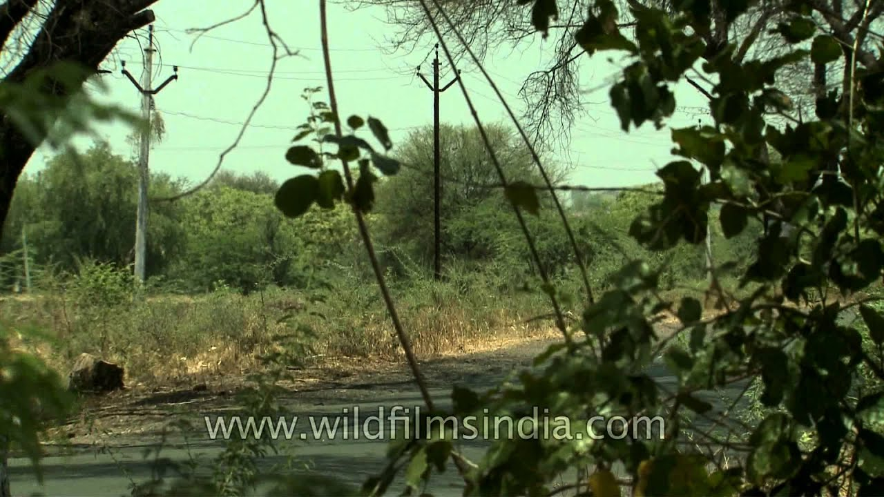 Agricultural land in Solapur