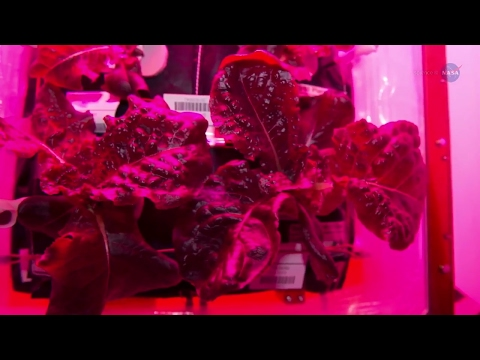 Historic Vegetable Moment on the Space Station - Science at NASA