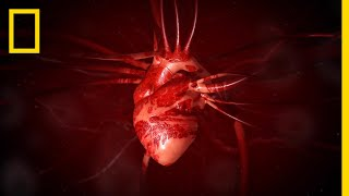 National Geographic: The Heart thumbnail