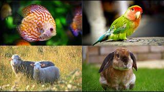 Quiz dla dzieci - zwierzęta domowe i gospodarskie 🐄🐕🐈🐔 (cz. 1)