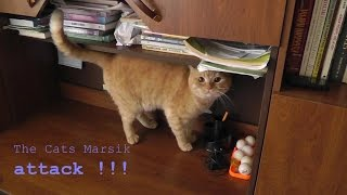 The Cats Marsik attack! - Кот Марсик сначала бесится, а затем - атакует!