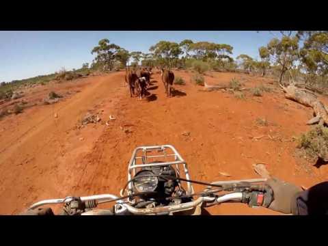 Cattle station next to Kalgoorlie, Western Australia