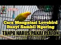 Cara Terbaru Mengatasi Burung Lovebird Yang Ngekek Ngering  Mp3 - Mp4 Download