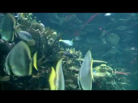 AMBIENT MUSIC - Oceanogràfic of Valencia | Music by Perry Frank
