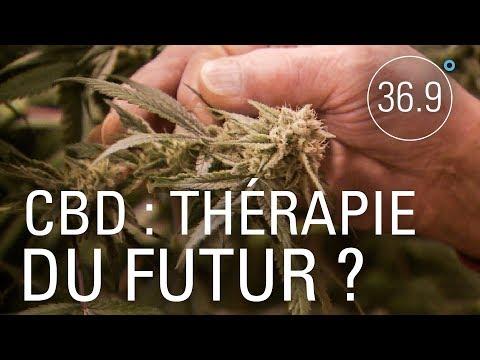 CBD: la déferlante du cannabis légal
