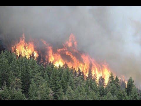 Лес рубят, щепки горят