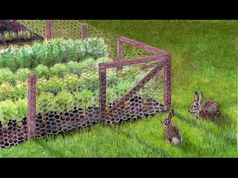 How to keep your garden from rabbits youtube - How to keep rabbits out of a garden ...