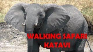 Walking Safari i Katavi