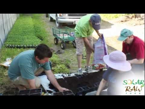 Organic Kale Farm - Solar Raw Food Ultimate Kale Chips