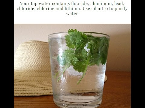 Your Tap Water Contains Fluoride, Aluminum, Lead, Chloride, Chlorine And Lithium  Use Cilantro To Pu