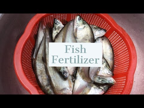 Organic Fertilizer_ Fish Elmosion Fertilizer