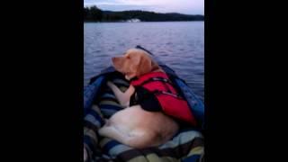 Dogfencepa's Duke The Training Dog Kayaking