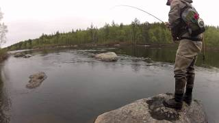 Atlantic Salmon - Kola River, Russia