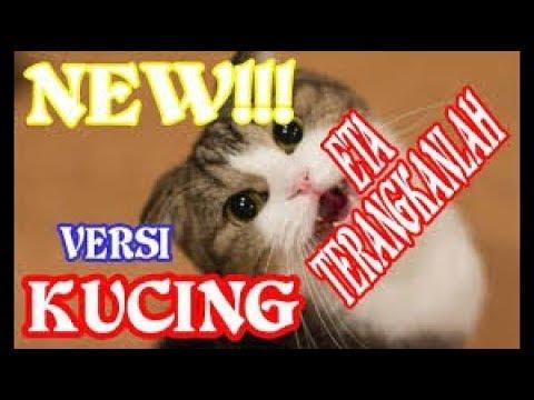 Gokil!!! Kucing nyanyi eta terangkanlah