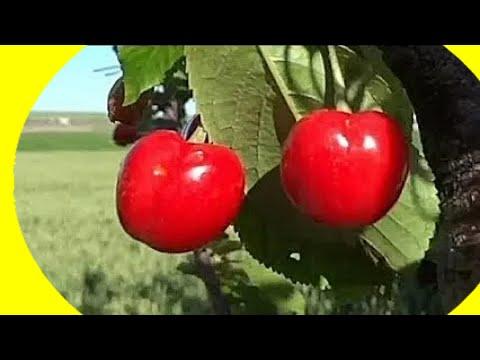 El huerto de Isidro: 15. Árboles frutales