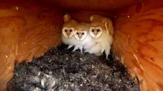 Utah Barn Owl Nest Box 2