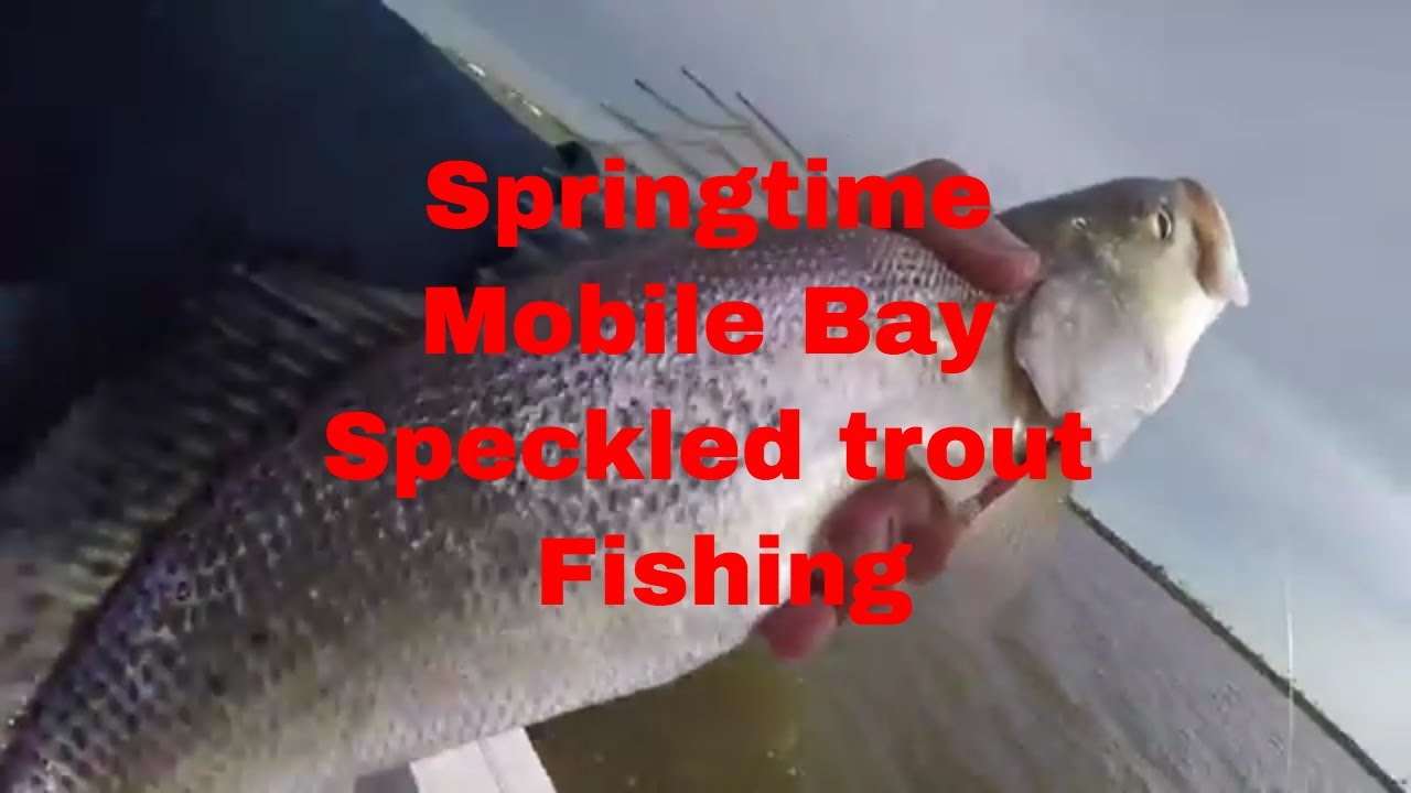 Mobile Bay springtime fishing for speckled trout - YouTube