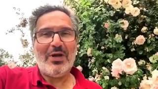 Comment traiter la maladie des taches noires du rosier ?
