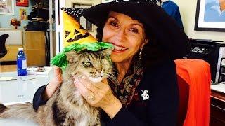 Homeless Cats Enjoy Halloween at Furkids