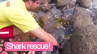 Baby white shark gets rescued in South Africa
