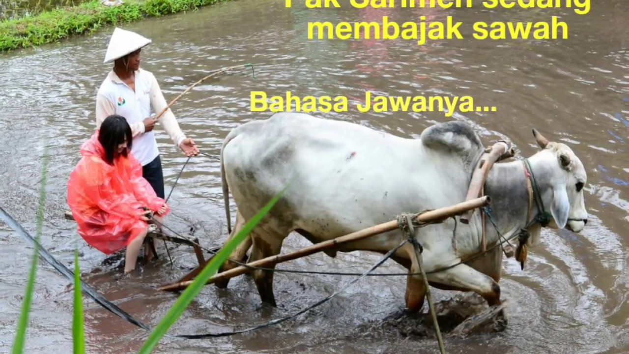 Kosa-kata versi Bahasa Jawa, Part III - YouTube