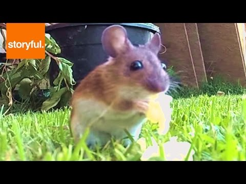 GoPro Catches Mouse Eating Cheese