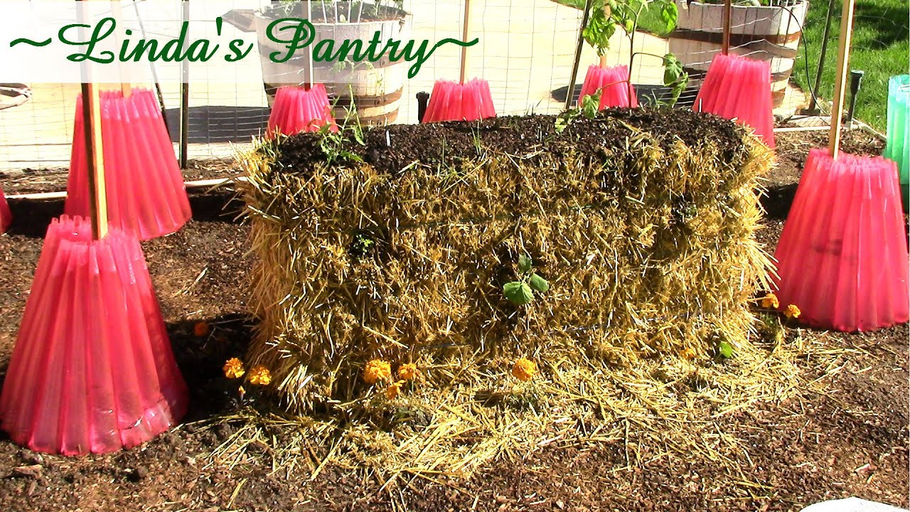 Straw Bale Garden Update 2015 With Linda\'s Pantry~ - YouTube