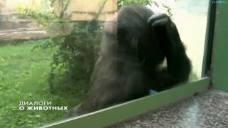 """""""Диалоги о животных"""". 21.01.2017г."""