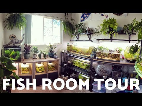 Fish Room Tour - August 2019