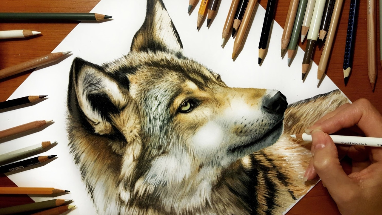 speed drawing of a wolf jasmina susak youtube