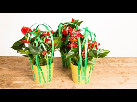 Easy Plant Decoration | Flower Factor How To | Plant Creation