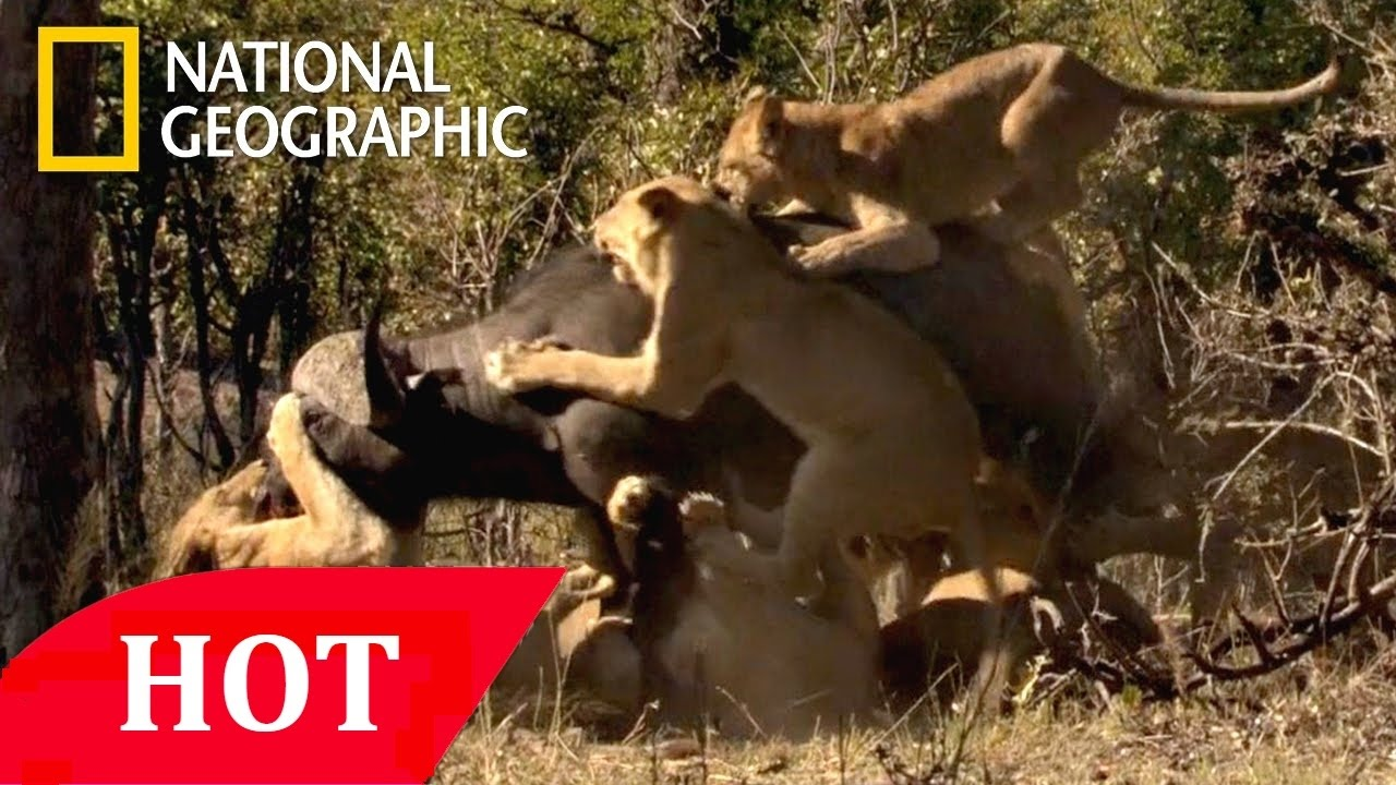 Deer Documentary BBC 2015 BEST Wild Animals Documentary National Geographic HD