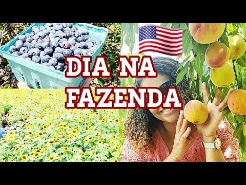 NOSSO DOMINGO NA FAZENDA/ ESTADOS UNIDOS