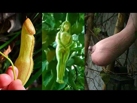 Amazing Tree of the world दुनिया के अजीब पौधे जिन्हे देखकर आप हैरान हो जाओगे
