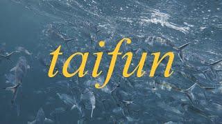 Download BARASUARA - TAIFUN ( UNOFFICIAL LYRIC VIDEO by holasultan )