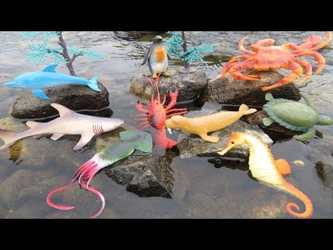 Learn Sea Animals Names For Children New Toy Videos For Kids Real Life Ocean Creatures Shark Turtle