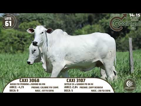 LOTE 61   CAXI 3068, CAXI 3107