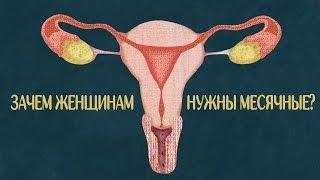Зачем женщинам месячные?