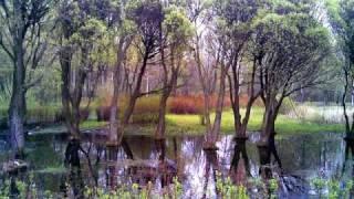 Memory (Память) from musical
